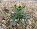 谷山浩子のオールナイトニッポン 1984年11月01日