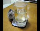 ウイスキー飲ませろー!!