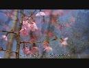 【HD】2010年春の京都・滋賀に行ってきた(2)【京都府立植物園】