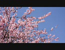 【HD】2010年春の京都・滋賀に行ってきた(3)【京都から滋賀へ】