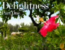 "Progressive Mix ""Delightness"" パート1"
