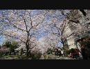 【HD】2010年春の京都・滋賀に行ってきた(8)【哲学の道】