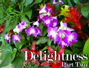 "Progressive Mix ""Delightness"" パート2"