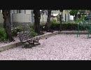 【FULLHD】桜吹雪・桜の絨毯
