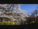 【HD】2010年春の京都・滋賀に行ってきた(10)【山科~】