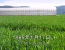 谷山浩子のオールナイトニッポン 1985年01