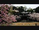 【HD】2010年春の京都・滋賀に行ってきた(14)【勧修寺~】