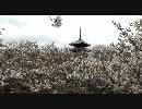 【HD】2010年春の京都・滋賀に行ってきた(18)【仁和寺~】