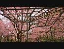 【HD】2010年春の京都・滋賀に行ってきた(19)【退蔵院・平安神宮】