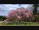 【HD】2010年春の京都・滋賀に行ってきた(21)【上賀茂神社】