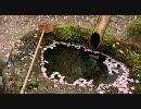 【HD】2010年春の京都・滋賀に行ってきた(22)【終】