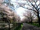【自転車載動画】見沼代用水 西縁・東縁 1