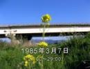 谷山浩子のオールナイトニッポン 1985年03月07日