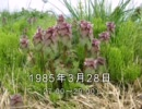 谷山浩子のオールナイトニッポン 1985年03