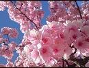 春~spring~