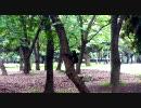 朝の公園でカラスに威嚇されてみた