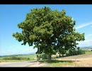 「この木なんの木」から「き」だけを集めてみた