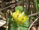 四季 より「春」(ヴィヴァルディ) を初音ミクが歌います。