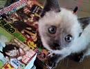 子猫メテオとラテ成長記録 6 『お腹空いた頃』