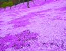 旅人なひととき '09初夏北海道満喫の旅(再編集) #3