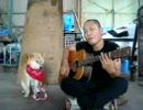 飼い主の歌にしょうがなく協力する柴犬