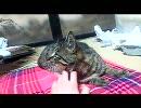 キジトラ猫ポン太6