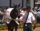 ウイニングチケット&ビワハヤヒデin函館競馬場 2010/7/25