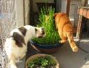 猫のサラダバー食べ放題