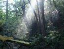 ピアノ「もののけ姫」 と屋久島