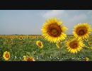 【HD】2010年夏・旅に出てみた(1)【ひまわり畑~】