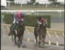 【競馬】 2009 エルムステークス マチカネニホンバレ 【ちょっと盛り】