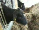 福島県家畜改良センター本部 一般向け畜舎