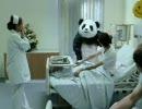【キレぱんだ】Never say no to Panda!【海外CM】