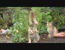 漁港の野生ネコ達を撮影
