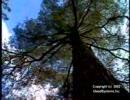 木で女の子が・・・