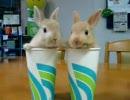 紙コップウサギ