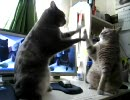 ハイタッチする猫