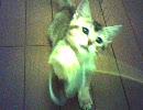 【ねこ】短足るうちゃん(5)~猫パンチ