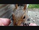 リスがひまわりの種を食べるよ