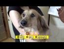【今週のペット】金太(ミックス、オス・6歳)