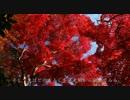 2010年紅葉の京都に行ってきた(10)【金蔵寺~】