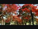 2010年紅葉の京都に行ってきた(21)【大覚寺~】