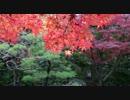 2010年紅葉の京都に行ってきた(22)【終】
