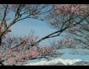 [立体音質]四季-春-