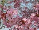 【がんばれゴエモン】浮世町アレンジ~春~(フルばーじょん)