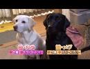 【今週のペット】ひめ&メグ(ラブラドールレトリバー)