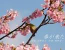 【初音ミク】 春が来た 【カバー】