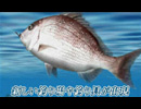 3DS『Fish Eyes 3D』PV