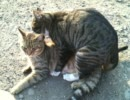 雄猫同士で「ウホッ! いい男……」「やらないか」