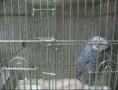 第69位:緊急地震速報のアラームを覚えちゃった鳥